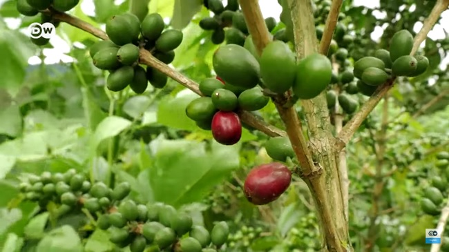 Simple Steps to Pick the Best Coffee Beans in the World