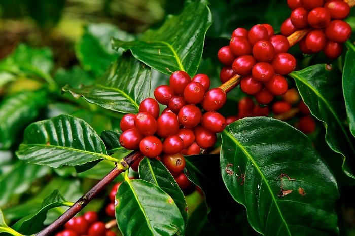 How to Pick the Best Coffee Beans in the World